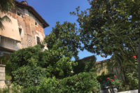 Castello e piante